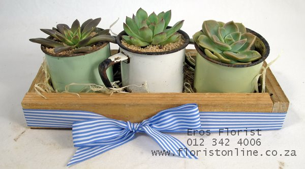 trio of vintage mugs with succulents